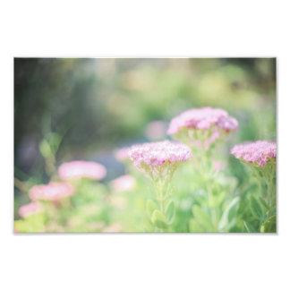 Rosa blommigt fototryck