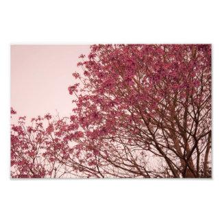 Rosa blommigtgrenar fotografiskt tryck