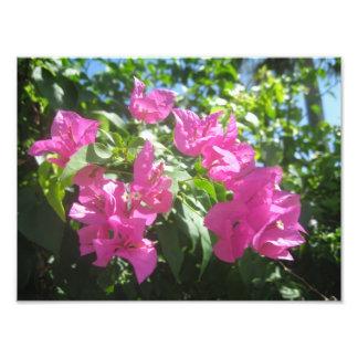 Rosa blommor fototryck