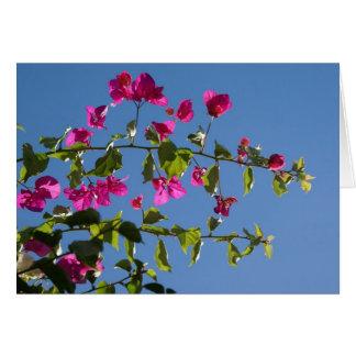 Rosa Bougainvillea i eftermiddagsol Hälsnings Kort