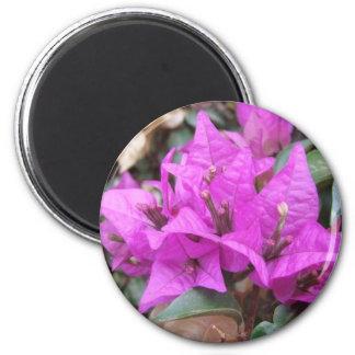 Rosa Bougainvilleablommor Magnet Rund 5.7 Cm