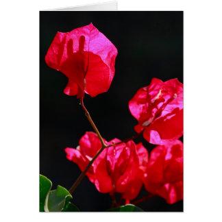 Rosa bougainvilleas hälsningskort