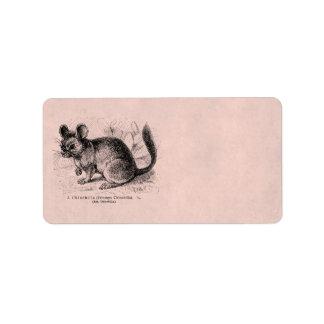 Rosa Chinchillas för vintage1800sChinchilla Adressetikett