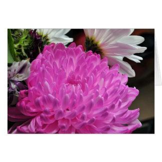 Rosa Chrysanthemum OBS Kort