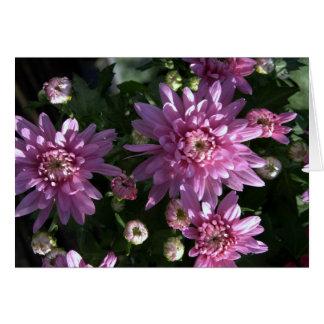 Rosa Chrysanthemums OBS Kort