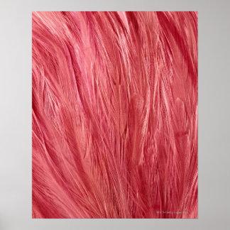Rosa fjädrar posters