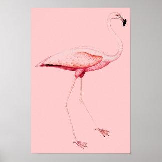 Rosa Flamingo Affischer