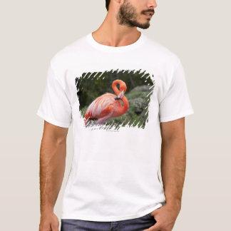 Rosa Flamingo Tshirts