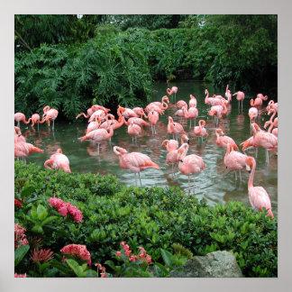 Rosa Flamingoaffisch Poster