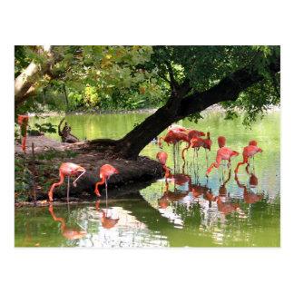 Rosa Flamingos 7124 Vykort