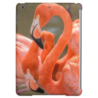 Rosa Flamingos på Gatorland