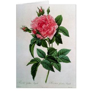 Rosa Gallica Regallis Hälsningskort