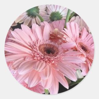 rosa gerberas runt klistermärke