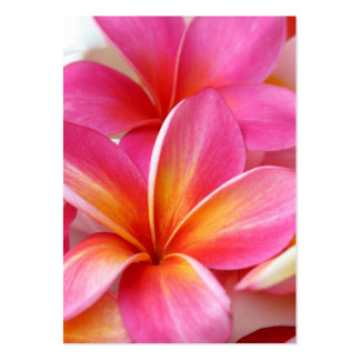 Rosa hawaiibo för PlumeriaFrangipaniHawaii blomma Set Av Breda Visitkort