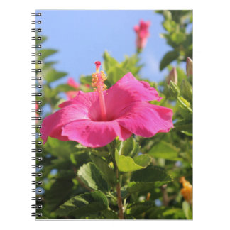 rosa hibiskus anteckningsbok