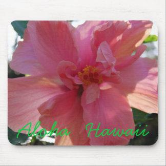 Rosa hibiskus i Hawaii Musmatta