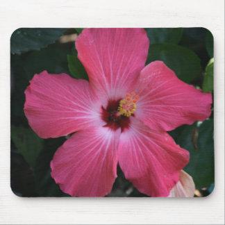 rosa hibiskus musmatta