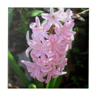 Rosa hyacintblommor kakelplatta