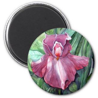 Rosa Iris Magnet