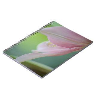 Rosa lilja anteckningsbok med spiral