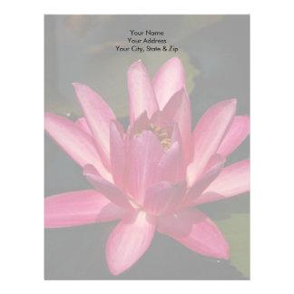 Rosa lotusblommanäckrosblomma brevhuvud