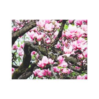 Rosa Magnolia - kanfaskonst - tropisk blomma Canvastryck