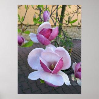 rosa magnolia poster