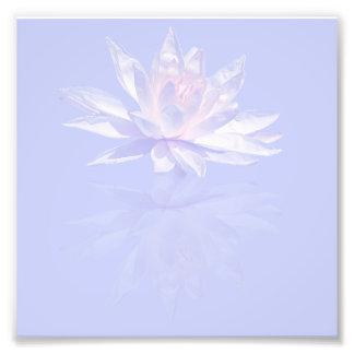 Rosa näckros och reflexion över lavendel fototryck