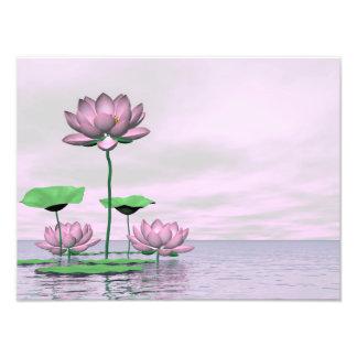 Rosa näckrosor och lotusblommablommor fototryck