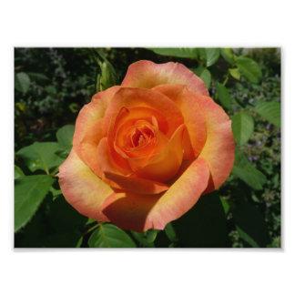 Rosa nätt blommigt för persika fototryck