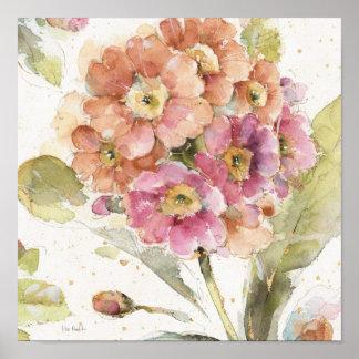 Rosa och orange Primrose Poster