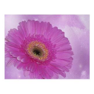 Rosa och purpurfärgad gerberdaisy vykort