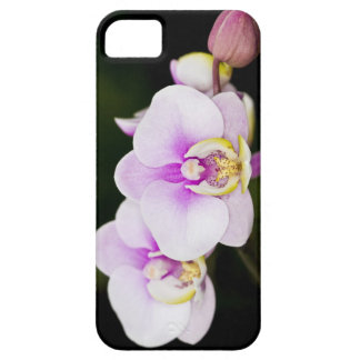 Rosa Orchid iPhone 5 Case-Mate Fodral