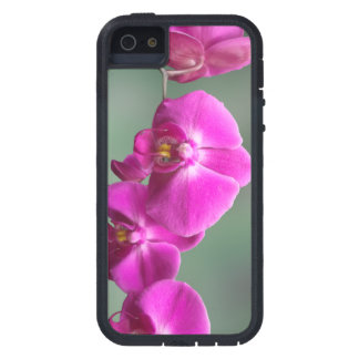 Rosa Orchids iPhone 5 Fodraler