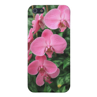 Rosa Orchids iPhone 5 Hud