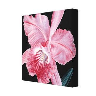 Rosa orchidsvartkanfas canvastryck