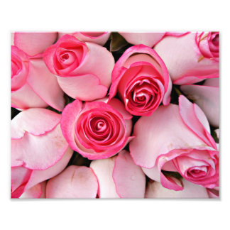 Rosa oskyldiga ro och den delikat roknoppen blomma fototryck
