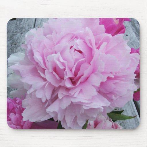Rosa pioner/pionblommamusmatta musmatta