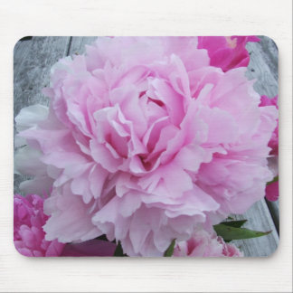 Rosa pioner/pionblommamusmatta musmattor