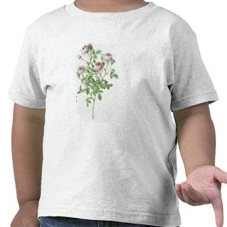 Rosa Pomponia, från 'Les ro Tee Shirt