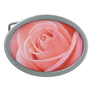 Rosa ros för kor avbildar solo