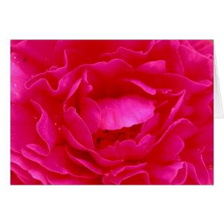Rosa ros hälsningskort