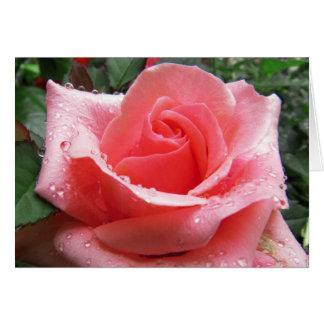 Rosa ros med dagg noterar kortet OBS kort