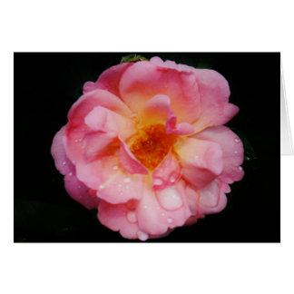 Rosa ros med dagg tappar svart bakgrund hälsningskort