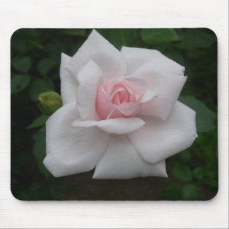 Rosa ros musmatta