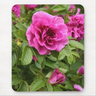 Rosa ros på Mousepad Musmatta