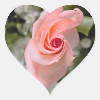 Rosa rosfoto hjärtformat klistermärke