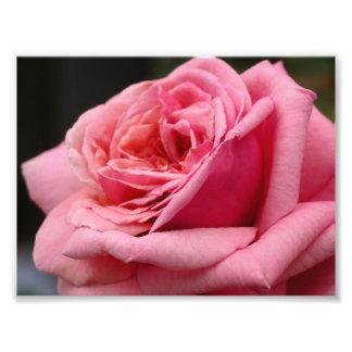 Rosa rossötblommigt fototryck