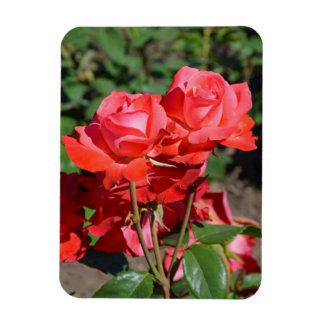 Rosa rostryckmagnet magnet