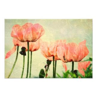 Rosa vallmor och blommigten virvlar runt konstfoto